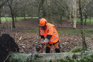 chainsaw-training-safety