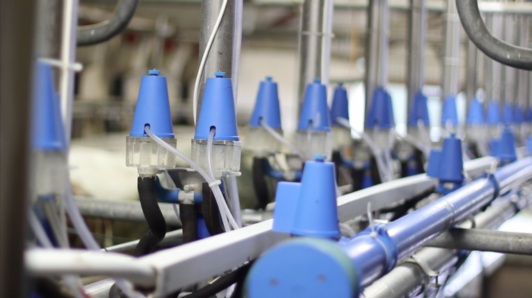 Read more about the article The Importance of Good Milking Parlour Hygiene