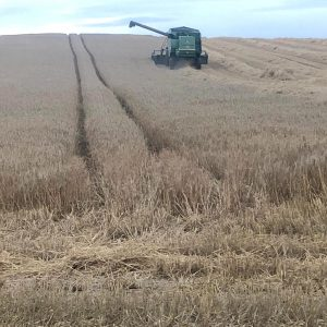 harvesting-tillage-combine