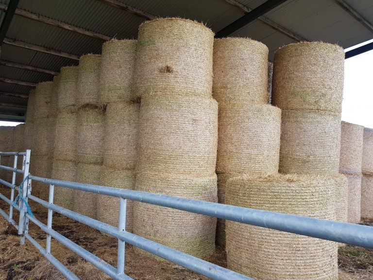 Alternative Forms Of Bedding Due To Straw Shortage